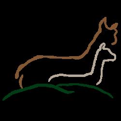 Alpakas am Hirseberg
